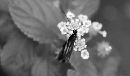 Фото Бабочка сидит на белом цветке и размахивает крылышками