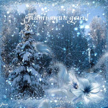 Фото Зимний лес, деревья покрыты снегом, падающие снежинки искрятся на солнце (Татьянин день!)