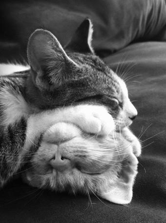 Фото Два спящих котенка