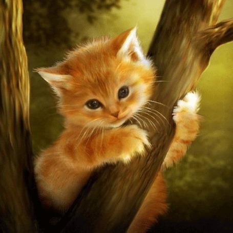 Фото Рыжий котенок на дереве