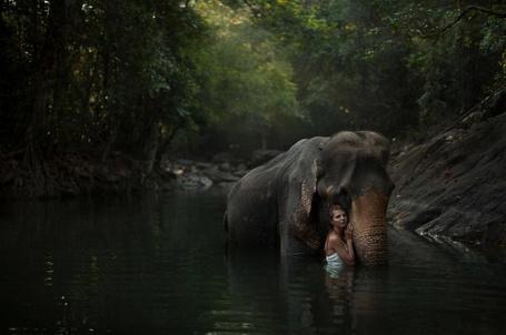 Фото Девушка стоит рядом со слоном в воде, фотограф Катерина Плотникова