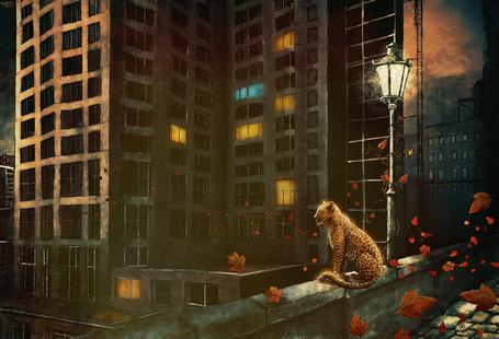 Фото Леопард сидит возле уличного фонаря и смотрит на ночной город