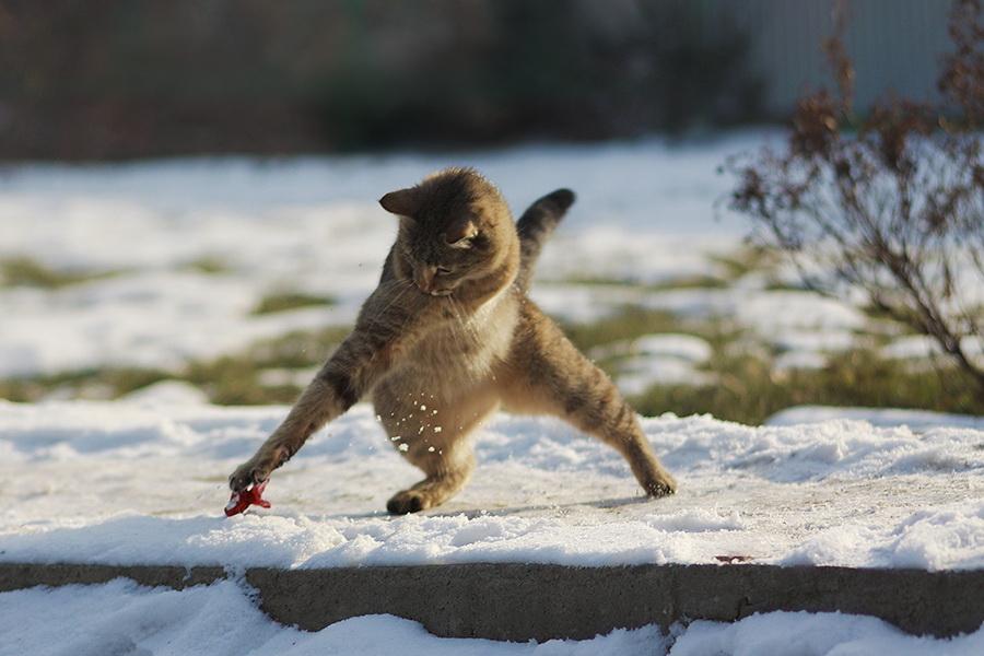 На снегу фотограф мира голубь