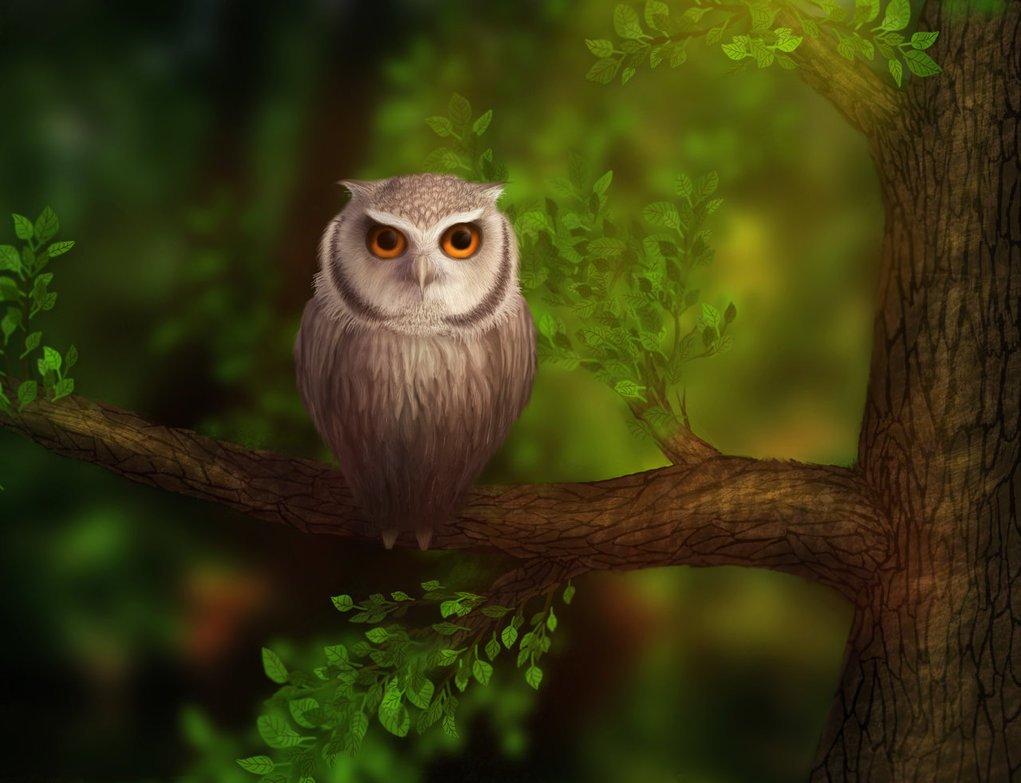 рисунок сова на ветке дерева как будет клевать