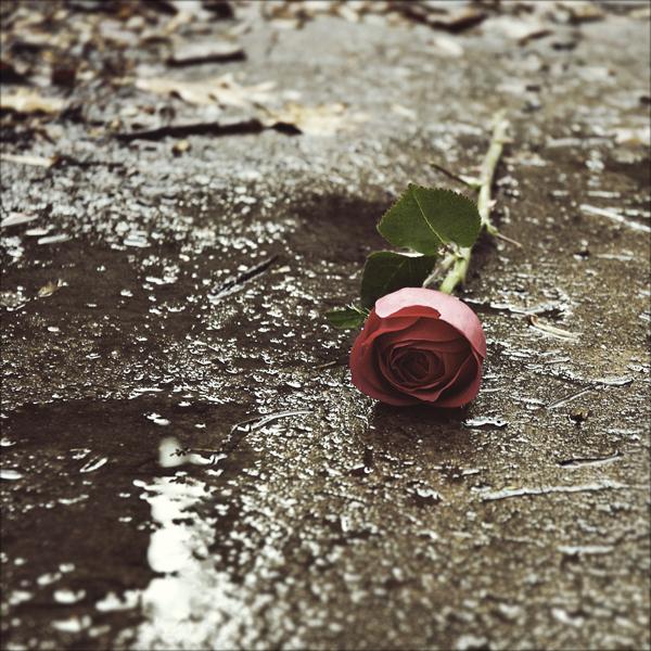 картинки грустных розы кем даша