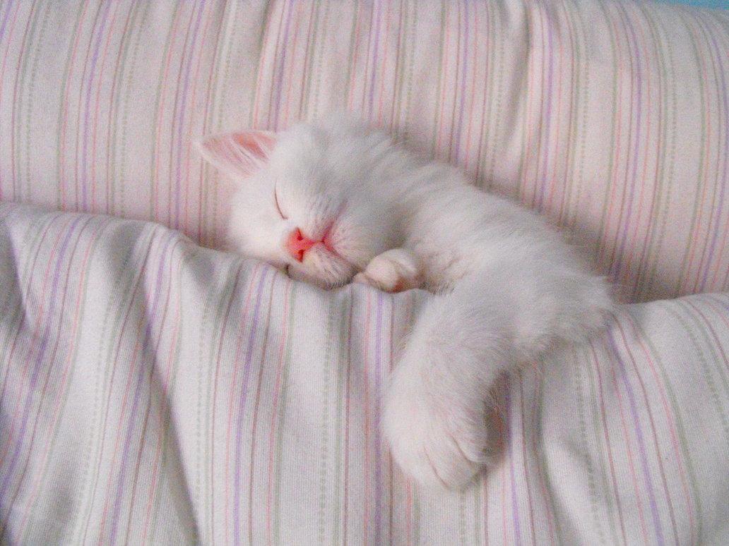 Картинки про сон кошек девушка