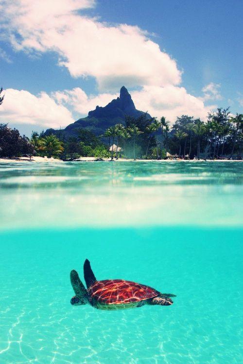 Фото черепаха в океане