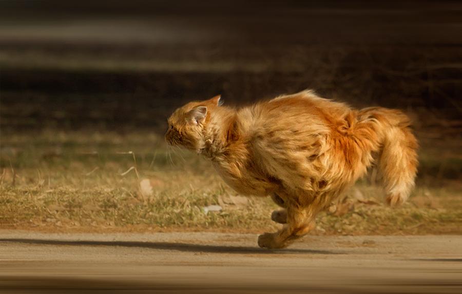 Картинка убегающий кот