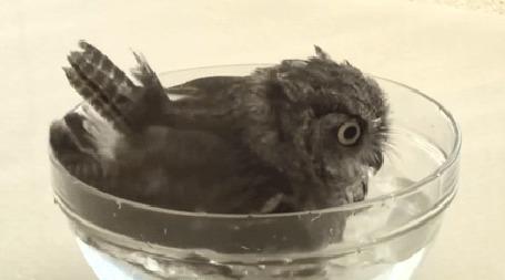 Фото Птица моется в миске