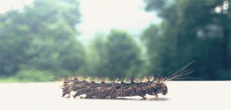 Фото Гусеница ползет по ровной поверхности