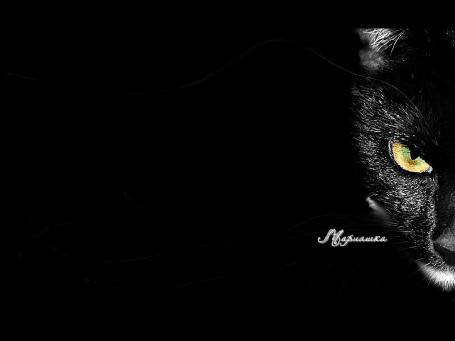 Фото Черный кот на черном фоне