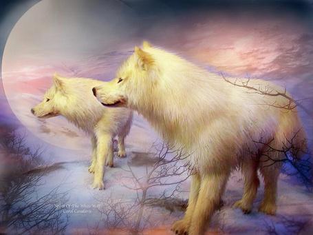 Фото Два белых волка стоят на снегу возле деревьев и куда-то пристально смотрят