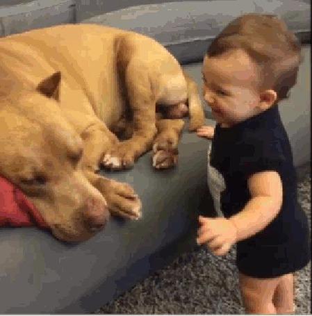Фото Малыш обменивается поцелуями с собакой