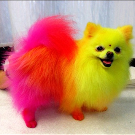 Фото Собачка с разноцветной шерстью