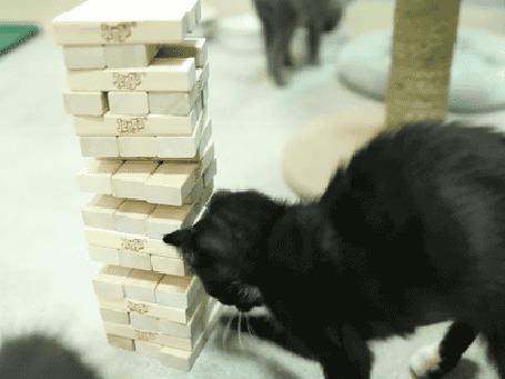 Фото Кот играет в дженгу с хозяином