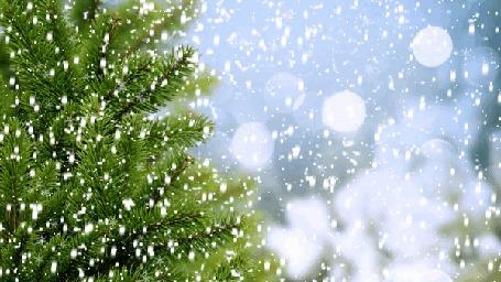 Фото Зеленая елка под снегопадом