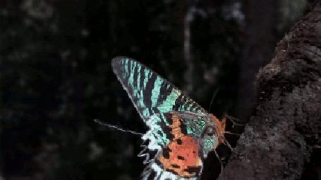 Фото Бабочка взлетает с дерева