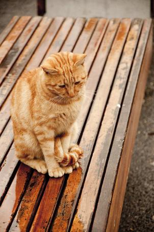 С котом на лавочке сидит