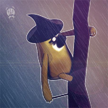 Фото Необычное животное под дождем, by Vusiuz