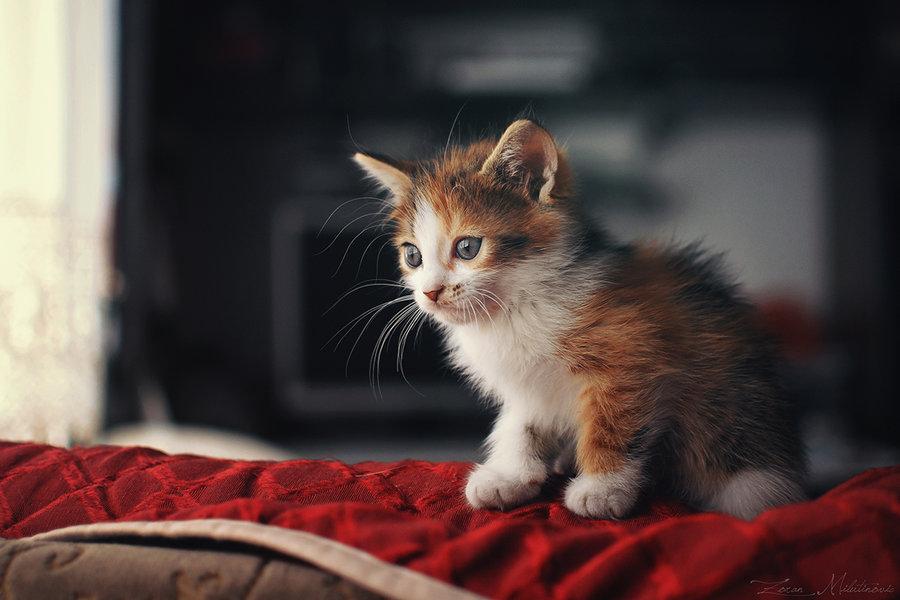 Картинки шевелящийся котенок сообщает источник