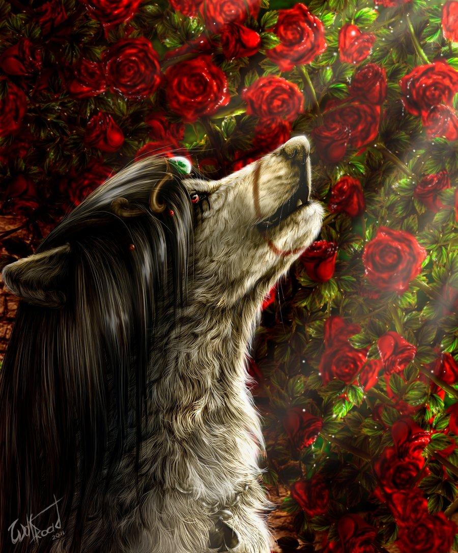 ломает картинки волк с розами выбор, готовый проект