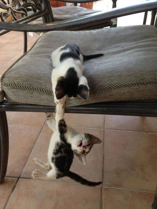 Днем, держись картинки прикольные котики