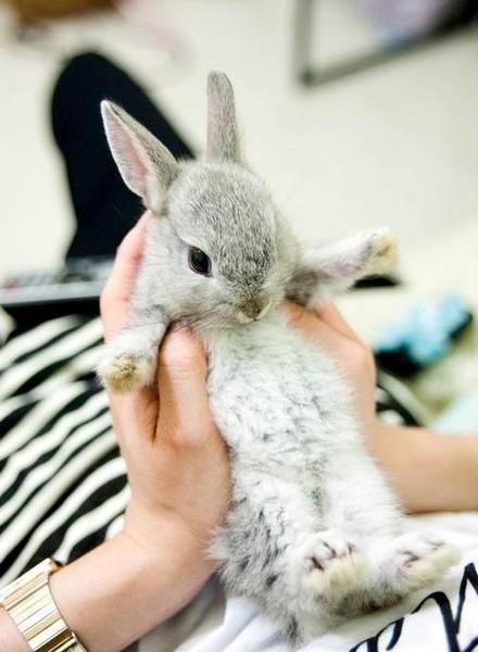 Фото Маленького серого крольченка держат в руках