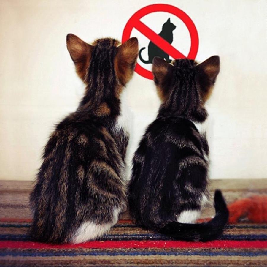 чтг необходимо давать котёнку чтоб он какал