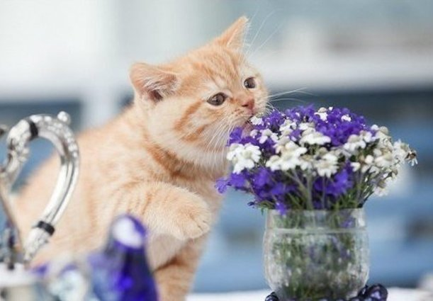 Фото Котенок сидя на столе приподнял лапку и нюхает цветы в вазочке