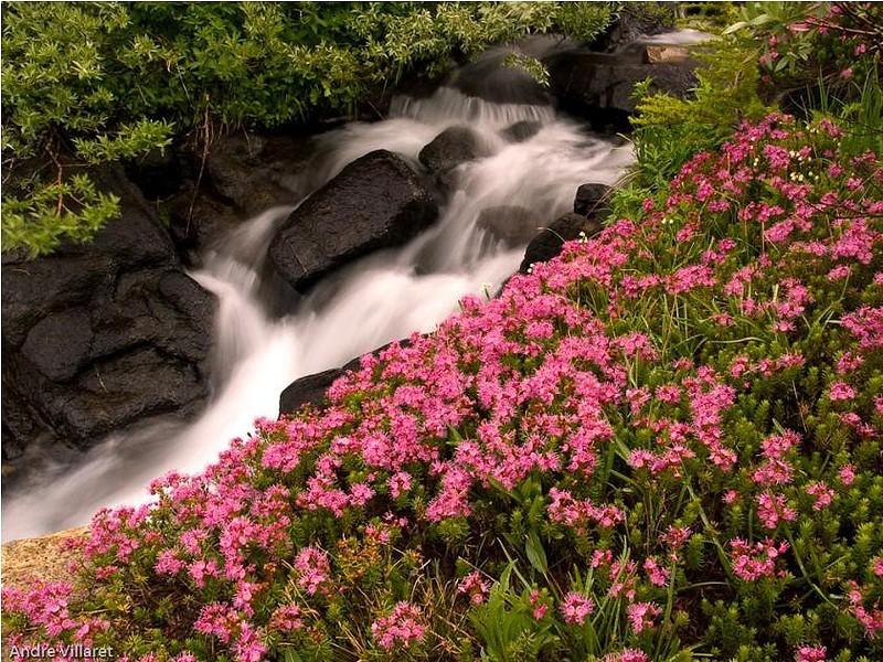 модели картинки поляна с рекой цветами водопадом сих пор мне