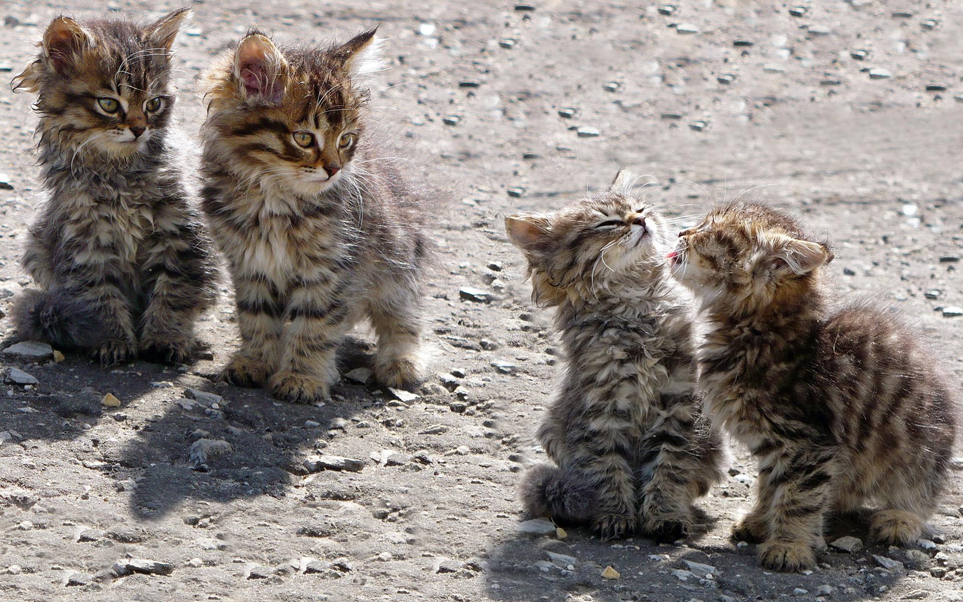 Смешные котята и кошки картинки, днем рождения ольги