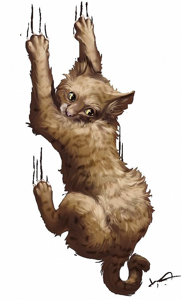 Коготь кота картинка