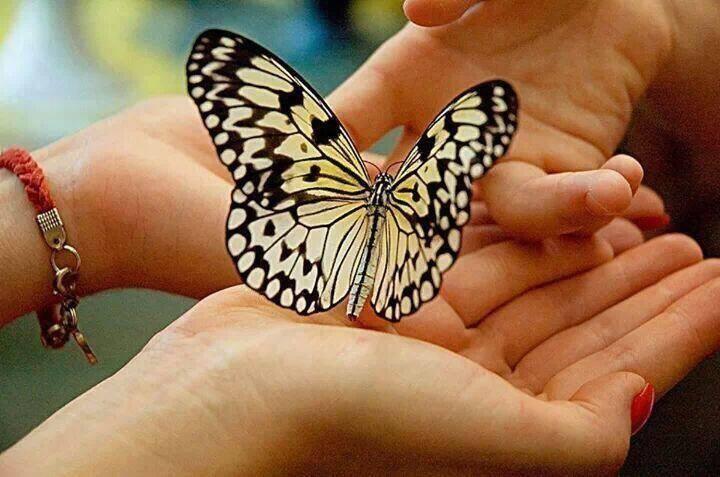 мы бабочек ловим губами