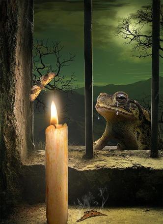 Фото Плачущая лягушка, сидящая снаружи каменного проема с решеткой, смотрит на бабочку, кружащую над пламенем свечи, рядом со свечой, на полу лежит бабочка с обгоревшими и дымящимися крылышками, автор sasha-fantom