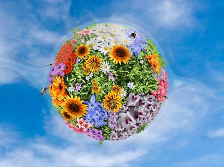 Фото Земной шар покрытый цветами, вокруг которого летают пчелы и собирают нектар с цветов