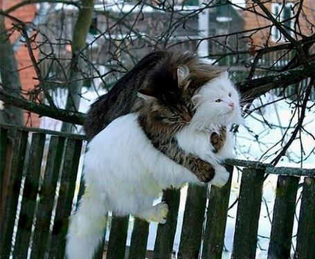 Фото Любовь весенняя, пусть даже кошачья