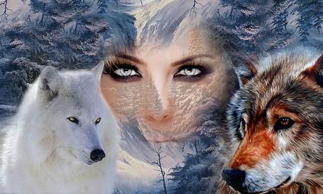Фото Девушка со светлыми глазами на фоне зимнего леса, между двух волков, белого и серого