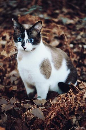 Фото Пятнистый кот сидит в траве и листьях выпучив глаза