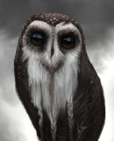 Фото Нарисованная сова крупным планом