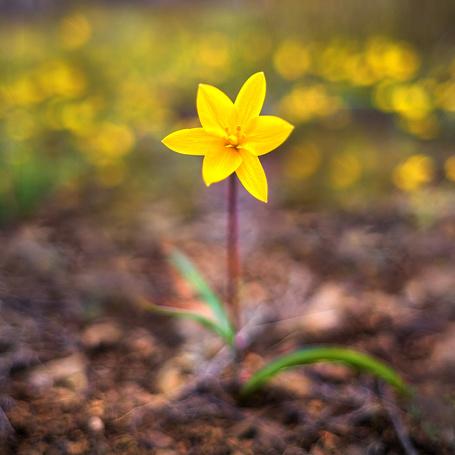 Фото цветок меланхолия