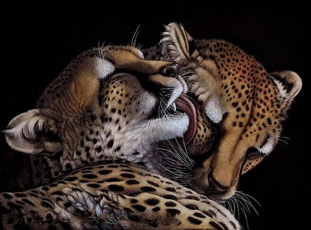 Фото Леопард с любовью и нежностью облизывает свою самку, художница Хизер Лара / Heather Lara/