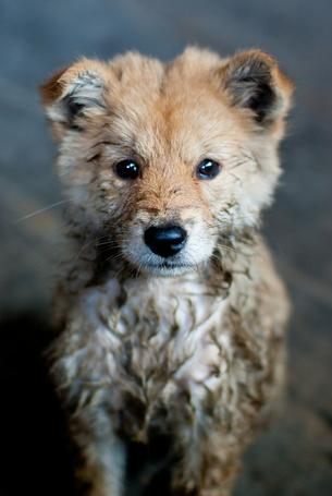 Фото Собака грустно смотрит