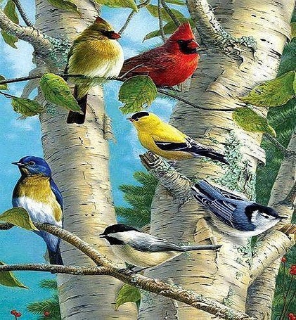 Фото Красивые птицы сидят на ветках белой березы, художник Джеймс Хаутманн / James Hautman/
