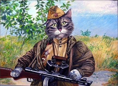 Фото Кот партизан, в форме и с оружием