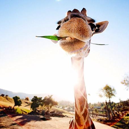 Фото Жираф на фоне неба