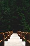 Фото ведущий в лес мост