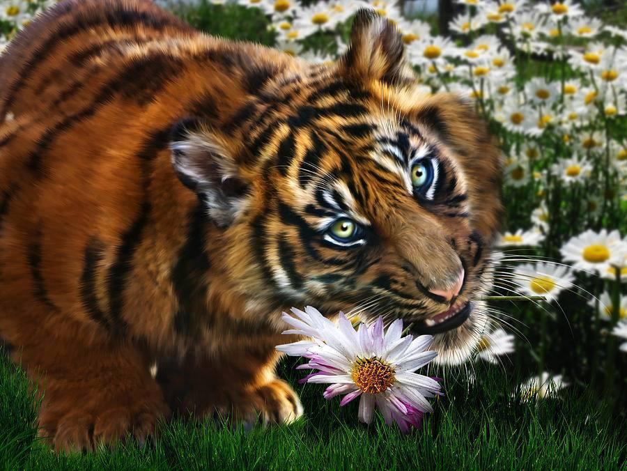 Картинки тигры с розами