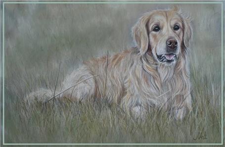 Фото Собака породы золотистый ретривер лежит на зеленой траве, автор Malina