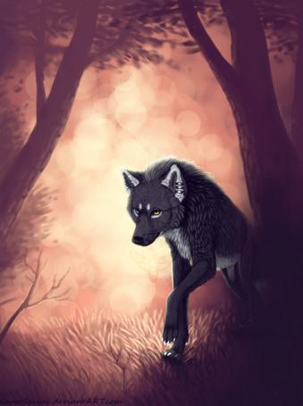 Фото Волк с разного цвета глазами идет по лесу, by IISky