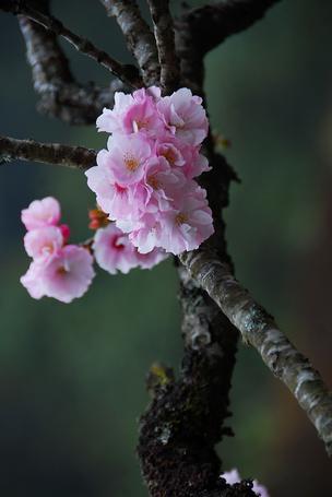 Фото Весенние цветы на дереве